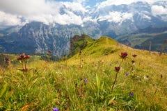 Pfad entlang Kante und durch alpine Wiesen wandern lizenzfreies stockbild