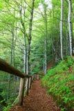 Pfad-Holz Lizenzfreies Stockfoto
