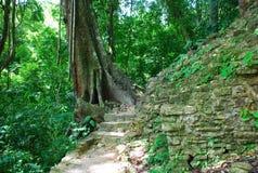 Pfad im Dschungel, Palenque, Mexiko Stockbilder