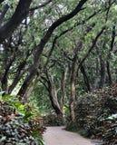 Pfad im Garten abgedeckt mit Bäumen Stockfotografie
