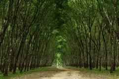 Pfad im grünen Wald Stockfotos