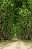 Pfad im grünen Wald Lizenzfreie Stockfotos