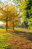 Pfad im Herbst lizenzfreie stockfotos