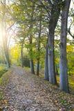 Pfad im Herbst lizenzfreie stockfotografie