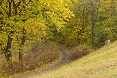 Pfad im Herbstholz Lizenzfreies Stockfoto