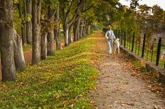 Pfad im Herbstpark lizenzfreie stockbilder