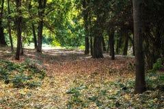 Pfad im Herbstwald lizenzfreie stockfotografie