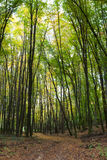 Pfad im Herbstwald Lizenzfreies Stockfoto