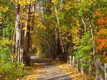 Pfad im Herbstwald Stockbild