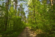 Pfad im Holz Lizenzfreies Stockbild