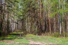 Pfad im Holz Lizenzfreies Stockfoto