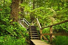 Pfad im mäßigen Regenwald Stockfotografie