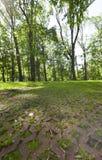 Pfad im Park Stockbilder