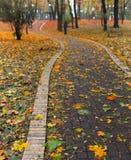 Pfad im Park lizenzfreie stockbilder