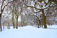 Pfad im Park am schneebedeckten Winter Stockfotografie