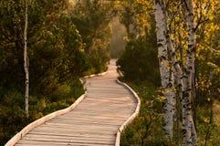 Pfad im schönen Wald lizenzfreies stockbild