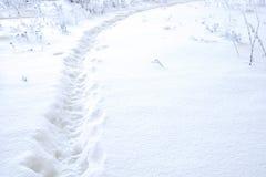 Pfad im Schnee Stockbilder