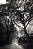Pfad im schottischen Wald Stockfotografie