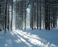 Pfad im Tannenwald Stockfotos