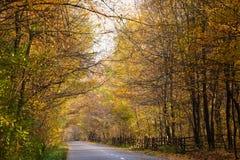 Pfad im Wald lizenzfreie stockfotos