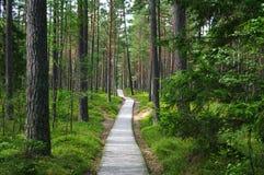 Pfad im Wald. lizenzfreie stockfotografie