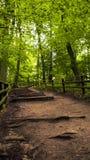 Pfad im Wald Lizenzfreies Stockfoto