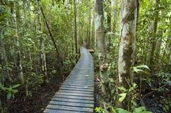 Pfad im Wald lizenzfreies stockbild