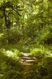 Pfad im Wald Lizenzfreie Stockfotografie