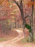 Pfad im Wald Stockfotografie