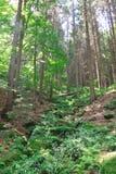 Pfad im Wald Stockfoto