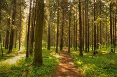 Pfad im wilden Wald stockbild