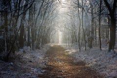 Pfad im Winterwald Stockfotos