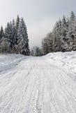 Pfad im Winterwald lizenzfreies stockfoto