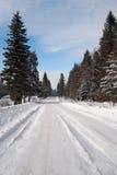 Pfad im Winterwald lizenzfreie stockfotos