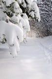Pfad im Winterwald Stockfoto