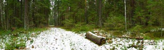 Pfad im Winterwald panoramisch Stockbild