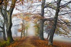 Pfad mit beechtrees im Nebel im Herbst lizenzfreie stockfotos