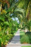 Pfad mit tropischen Bäumen Stockfotos