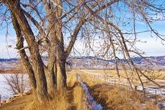 Pfad und Abzugsgraben unter einem hohen bloßen Baum Stockfotografie