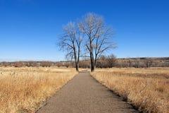 Pfad und angrenzende Bäume Stockfotos