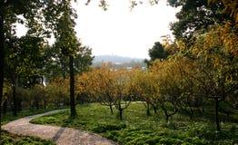 Pfad und Bäume im Park Stockfotografie