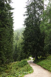 Pfad in Wald Stockbilder