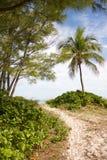 Pfad zum auf den Strand zu setzen lizenzfreie stockfotos