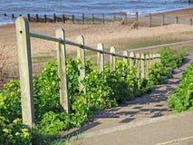 Pfad zum auf den Strand zu setzen Lizenzfreie Stockfotografie