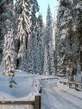Pfad zum Winter-Wald Stockfoto