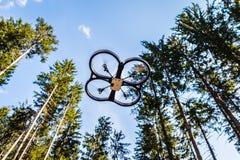 Pfadfinderbrummen im Wald stockbild
