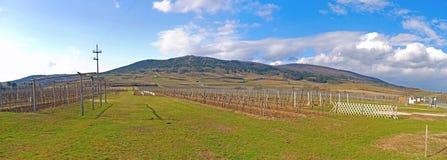 Pfaffstätten vingård i vintertiden Arkivfoton