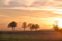 pfalz日落结构树步行者 免版税库存图片