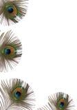 Pfau-Feder-Schönheit Lizenzfreies Stockbild
