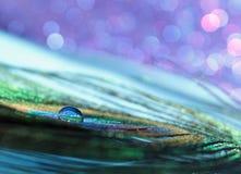 Pfau-Feder-Wasser-Tropfen Lizenzfreies Stockfoto